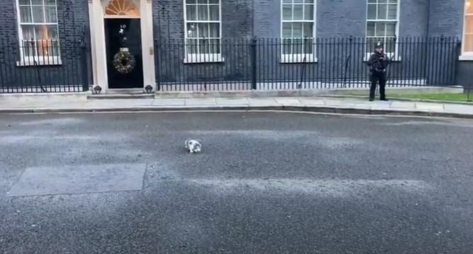 Мачката на Борис Џонсон му го украде шоуто, а еве што правеше (ВИДЕО)