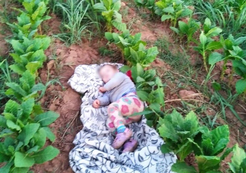 ФОТО: Ова е мојата ќеркичка со која беревме тутун годинава за да го дадеме без пари, срамота