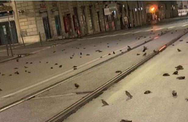 Додека луѓето се забавуваа, нивните срца пукнаа од страв: Стотици птици паднаа од небото после огнометот во Рим (ФОТО)