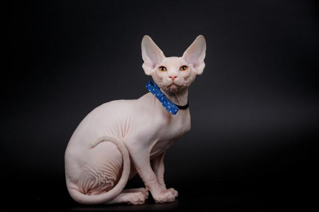 БИЗАРНО: Многумина ја осудуваат за тоа што и го направила на својата мачка, а таа вели дека само и пружа љубов! (ФОТО)