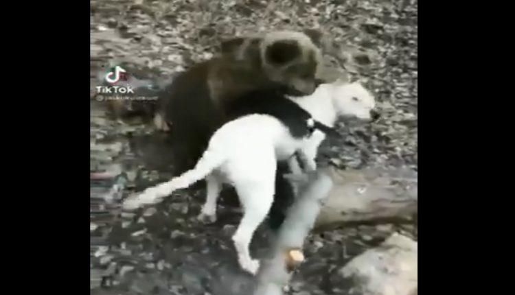 ВИДЕО: Скопјанец чува мече како домашно милениче
