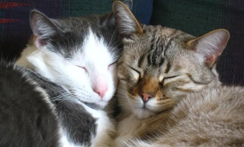 Ако дома чувате мачка, овие работи мора да ги знаете: Миризби кои ги плашат вашите миленичиња