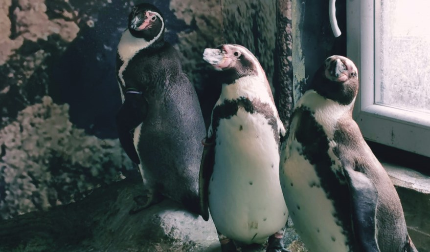 Пингвините излегоа од карантин, погледнете ги најуникатните жители на скопската зоолошка