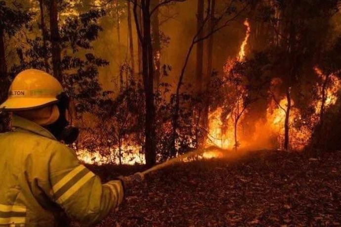 Пожар на Водно- при увидот пронајдени саксии со канабис