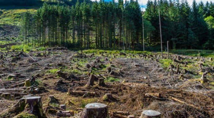 МВР работи на спречување на неконтролирана сеча на шумите