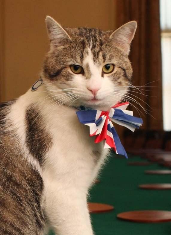 Ги освои срцата на јавноста и печатот – мачорот Лари во британскиот парламент наврши 10 години
