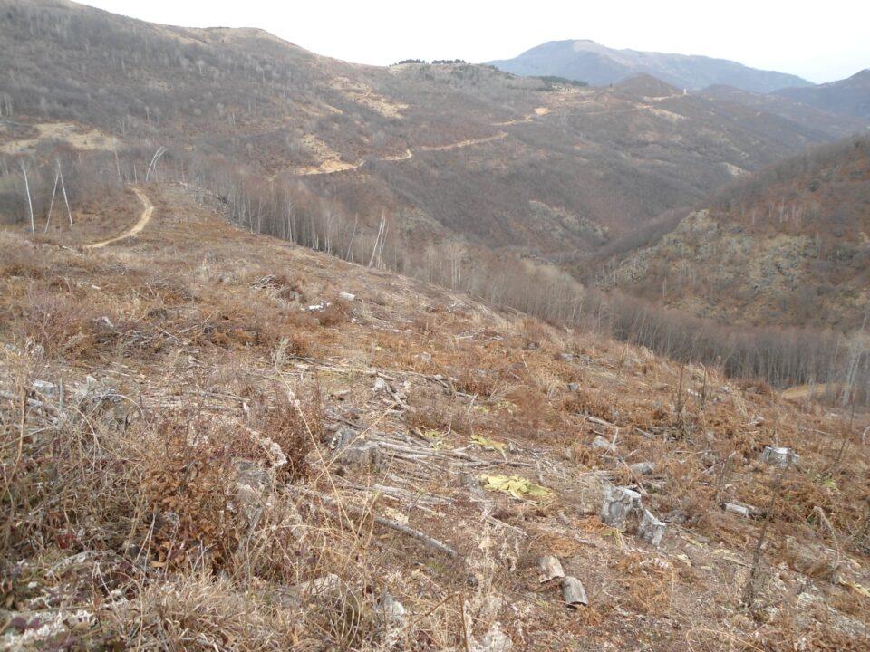 ФОТО: Вистински масакар од сеча на дрва на Драчевска планина – Јакупица!