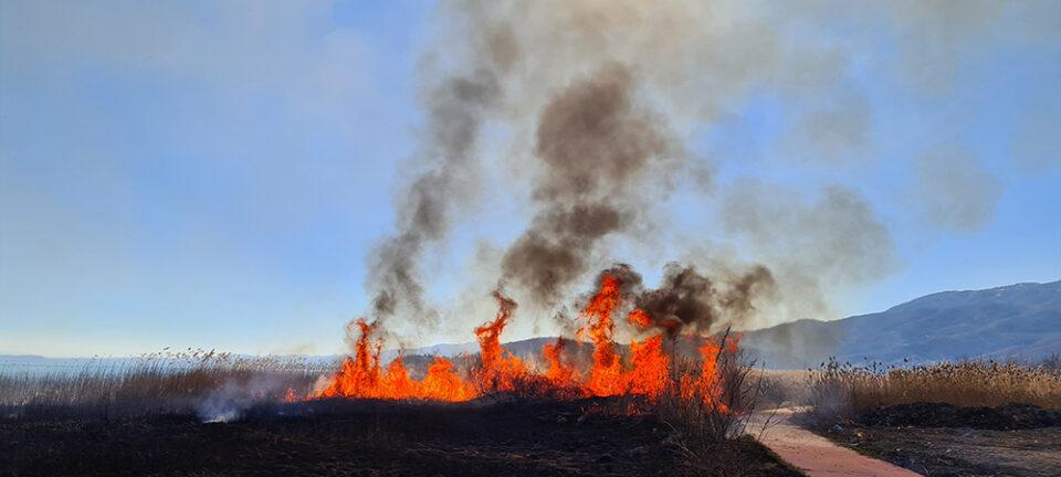 ФОТО: Повторно гори трската во струшко