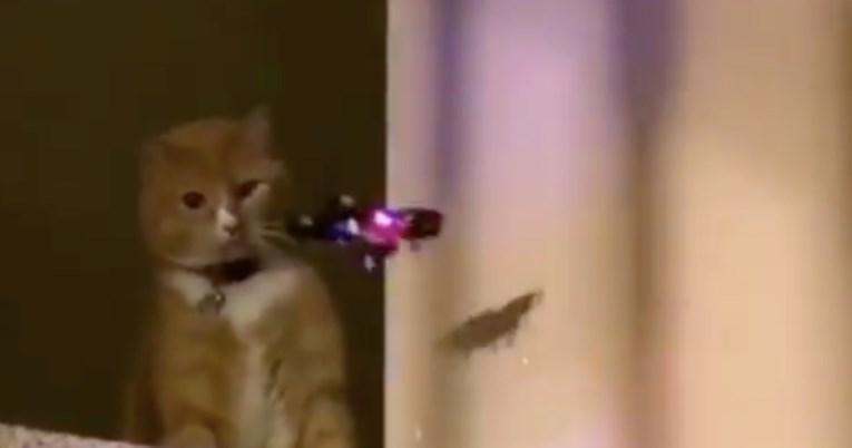"""И се приближи дрон а таа со еден удар го """"среди"""" – мачка стана хит на интернет (ВИДЕО)"""