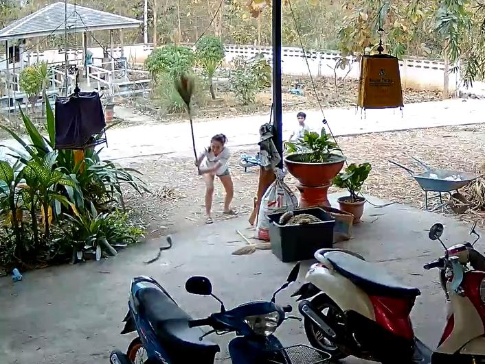 Змија влегла во двор, и завршила претепана со метла: Храбрата мајка се борела силно со отровничката (ВИДЕО)