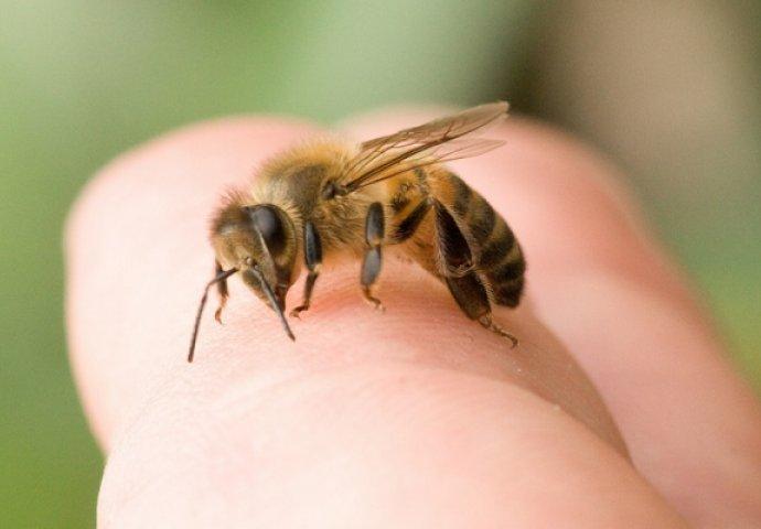 За некого е привремена болка, за други е опасно по живот: Што треба да знаете за убодите од пчела?