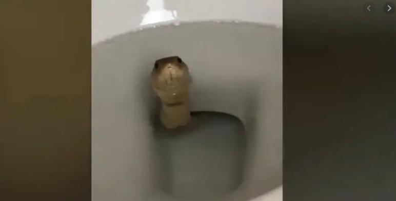 Сакал да оди во тоалет, кога видел што има таму му се стемнило (видео)