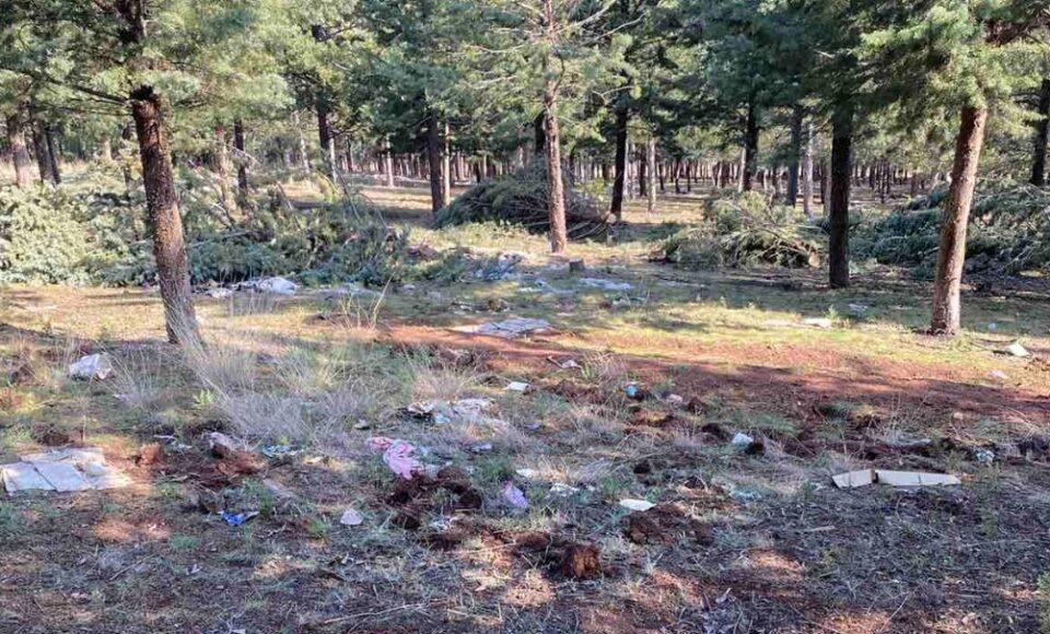 Нов вандалски чин: Брутална сеча на дрвја во општина Штип (ФОТО)