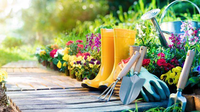 ОВИЕ ТРИ ЦВЕЌИЊА ПОСАДЕТЕ ГИ ВО АПРИЛ: Раскошно ќе цветат се до месец октомври (ФОТО)