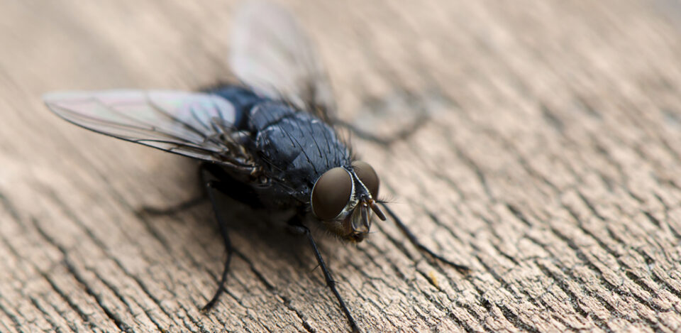 Совети против наезда од муви