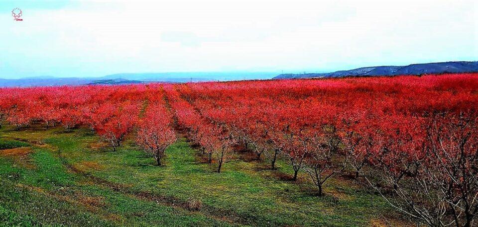 Димовски: Власта ја премолчува катастрофалната состојба на росоманските овоштари, одговорните лица да излезат на терен