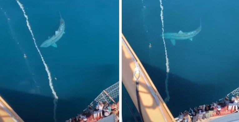 Џиновска ајкула снимена блиску брегот на Ирска