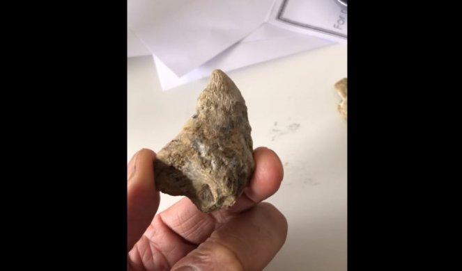 Шестгодишно дете барало црви во дворот, а потоа ископало нешто старо 488 милиони години (ФОТО+ВИДЕО)