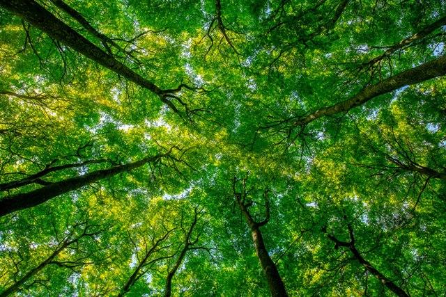 Шума со големина на Франција природно се обновила последниве 20 години