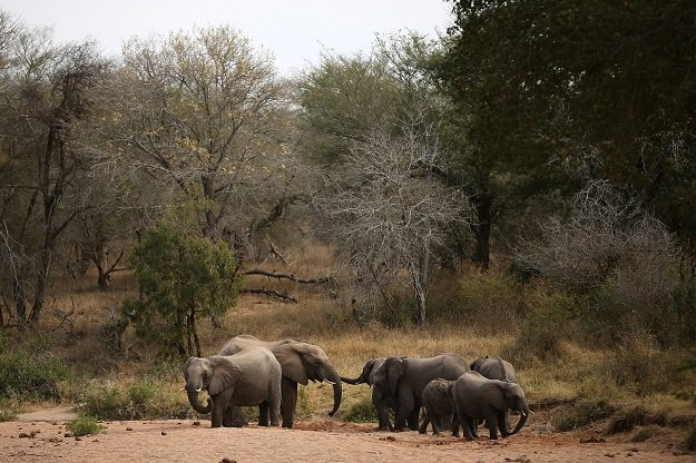 Гром уби цело стадо слонови