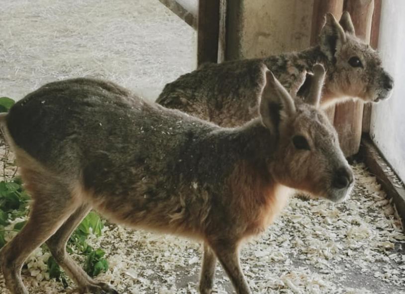 Во Скопје досега не сме ги виделе: Зоолошката има нови жители, сигурно ќе ви се допаднат (ФОТО)
