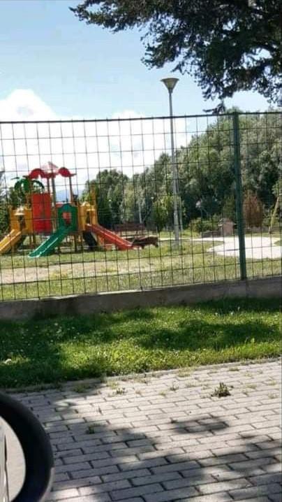 """ФОТО: Дива свиња """"си игра"""" во делчевскиот Детски парк"""