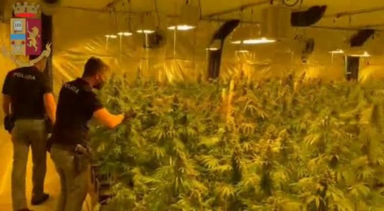 Во Италија запленети 650 килограми марихуана и уапсени Албанци кои ја одгледувале во пластеници