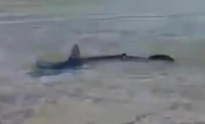 ВИДЕО: Внимавајте доколку летувате во Хрватска: Снимена ајкула во плитките води на Корчула