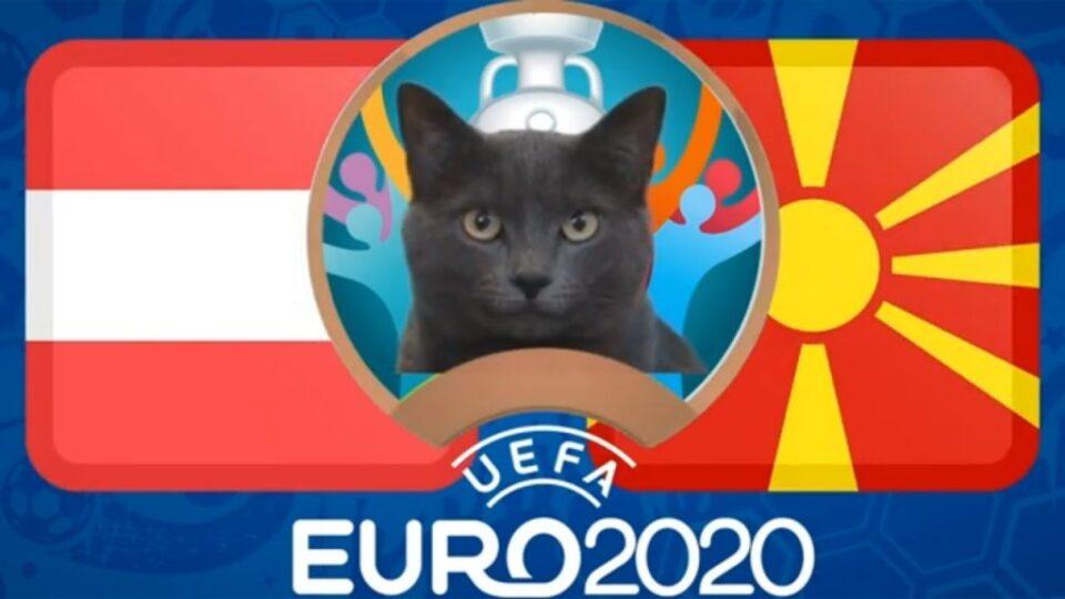 Мачката Кес ја даде прогнозата за денешниот меч на Македонија (видео)