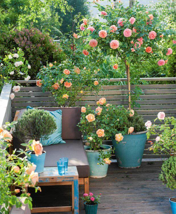 Засадете го ова цвеќе на балкон или во градината и претворете го летото во магија: Еве што ќе доминира оваа сезона