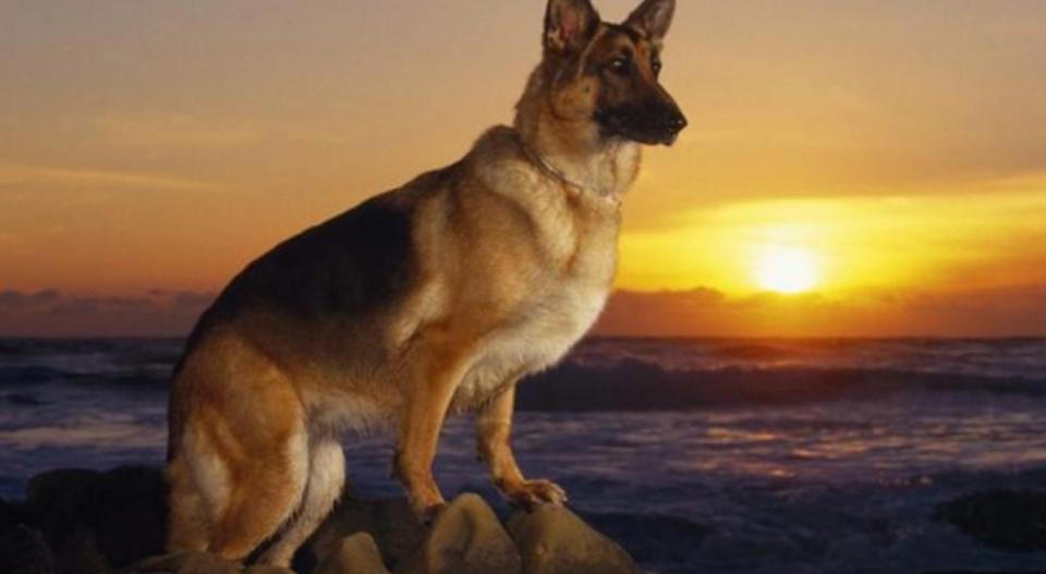 НАУЧНИЦИТЕ ПОТВРДИЈА: Ова се 2 работи што кучињата можат да ги почувствуваат, следате го нивното однесување и пред другите ќе дознаете што се спрема