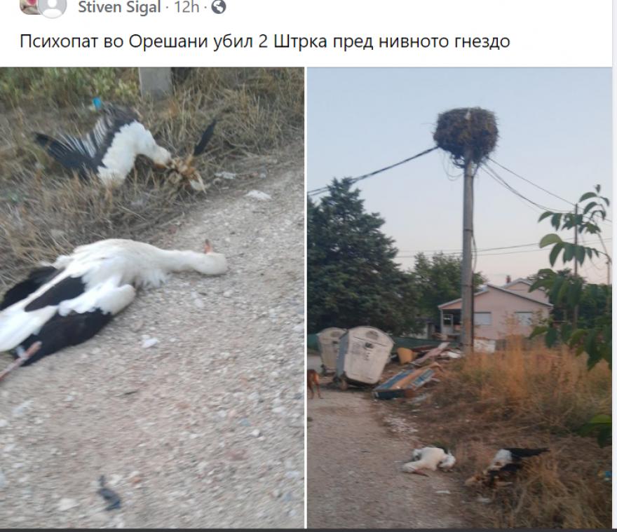 ФОТО: Во скопско Орешани убиени два штрка и фрлени блиску до нивното гнездо