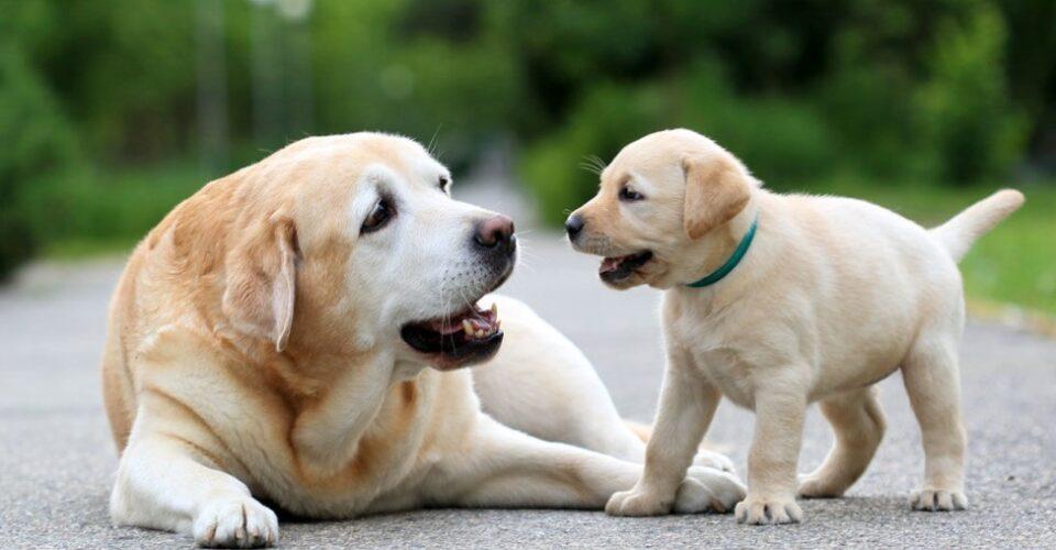 ВАЖНИ СОВЕТИ: Како да го заштитите вашето куче од жештините?
