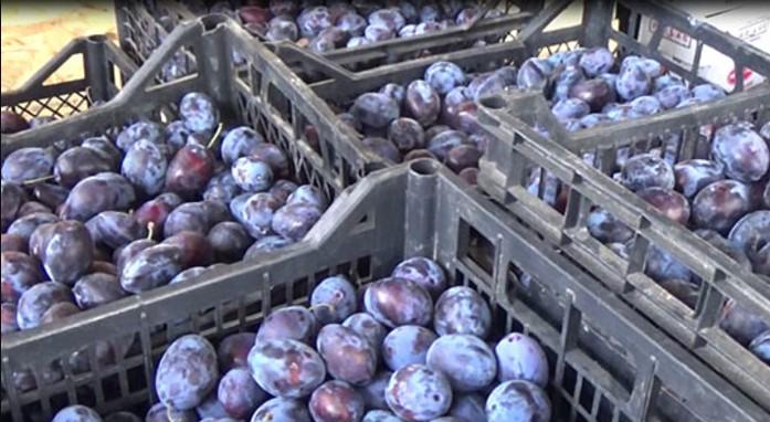 Во Република Српска забранет увоз на 400 килограми македонски сливи
