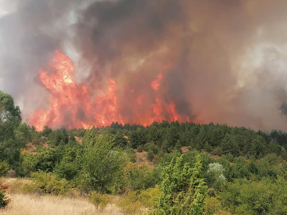 ФОТО+ВИДЕО: Голем пожар во Пехчево, граѓаните молат за помош