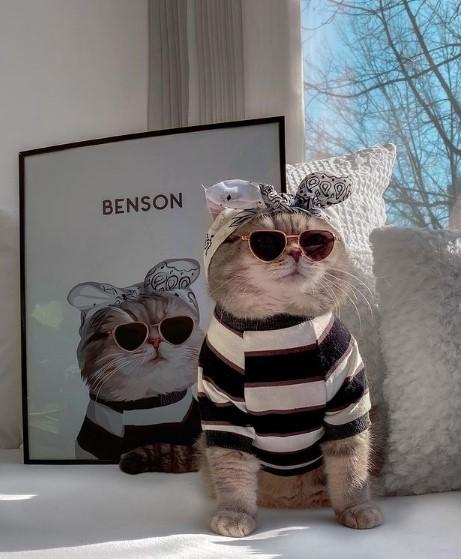 Бенсон – од бездомник, до Инстаграм-ѕвезда
