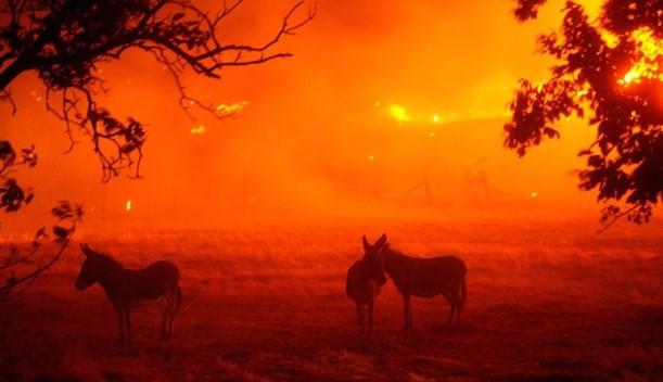 Бајден прогласи состојба на катастрофа во Калифорнија