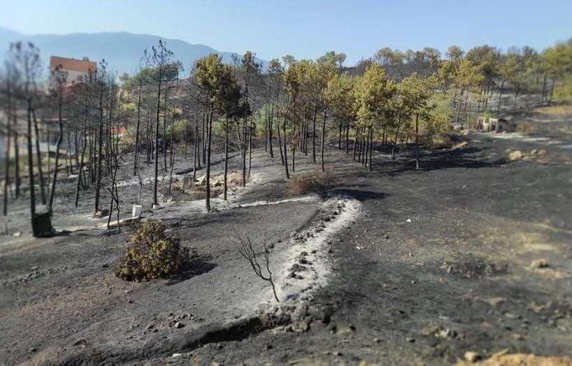 Граѓаните на Кочани со голи раце си го одбранија градот: Вака сега изгледаат местата каде вчера беснееше пожар (ФОТО)