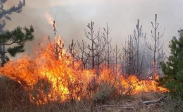 Словенија ги става на располагање своите капацитети за гасење на пожарите кај нас