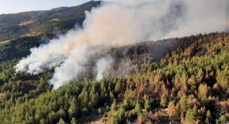 До каде е одговорноста за пожарите? Штети огромни, странци не спасуваа, а на површина неспособноста на државата!