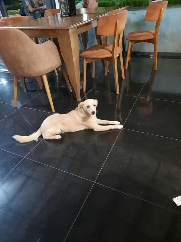 """Куче убиено со пушка кај ресторан """"Вила Парк"""""""