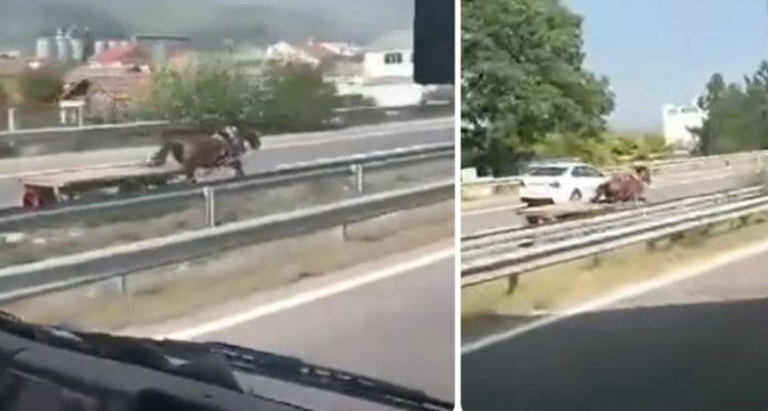"""Кривична пријава за """"предизвикување општа опасност"""" за сопственикот на коњот што се движеше по автопат"""
