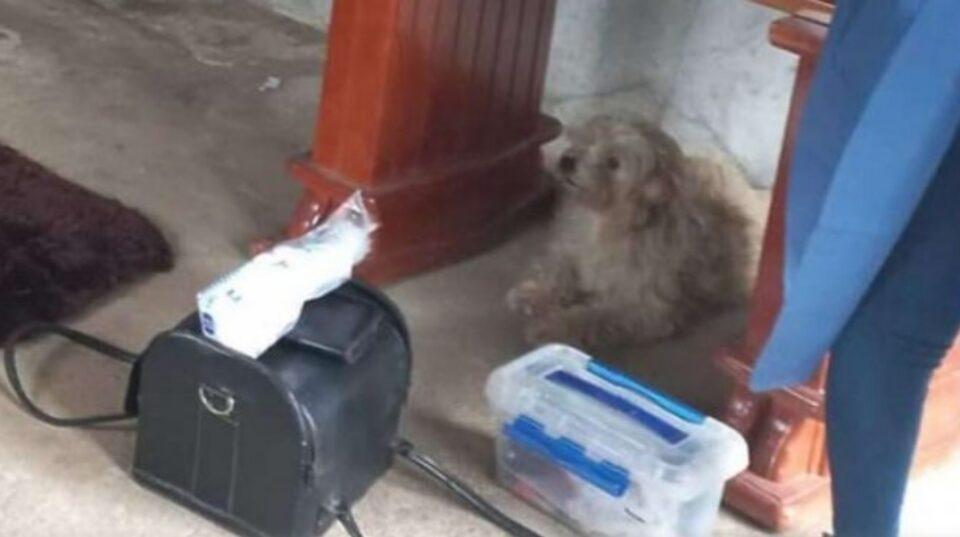 ЕМОТИВНО: Куче не сака да се раздели од својата почината сопственичка