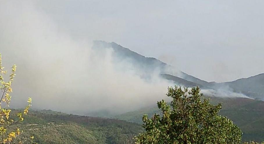 Гори нискостеблеста шума над Плетвар