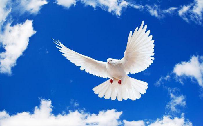 Денеска е светски ден на мирот