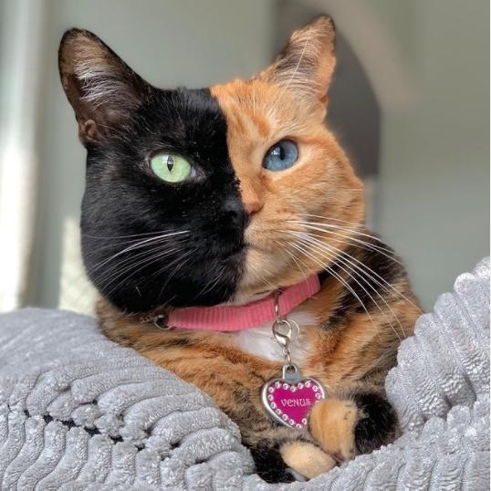 """ФОТО: """"Мачка со две лица"""" е хит на Инстаграм"""